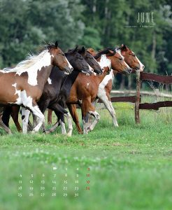 Guni-Kalender-2018-Juni-web