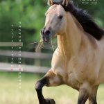 guni-pferdekalender2012-august