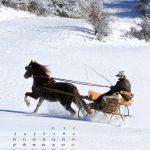 guni-pferdekalender2012-december