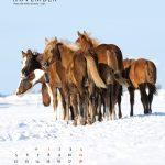 guni-pferdekalender2012-november