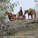 guni-pferdekalender2012-titel
