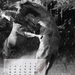 kalender-2016-10web