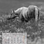 kalender-2016-6web