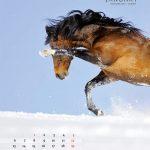 seitenlayout455x555-2014-2web