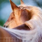 seitenlayout455x555-2014-4web