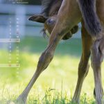 seitenlayout455x555-2014-5web