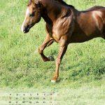 seitenlayout455x555-2014-7web